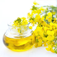 Canola Oil Benefits Pregnancy